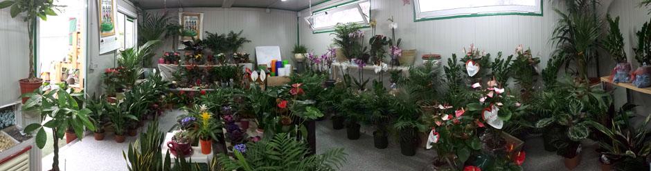 Oasi fiorita vivai di petrachi sonia a lecce vendita for Vendita piante orto